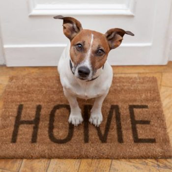 home-sweet-home-0710.jpg.824x0_q71_crop-scale