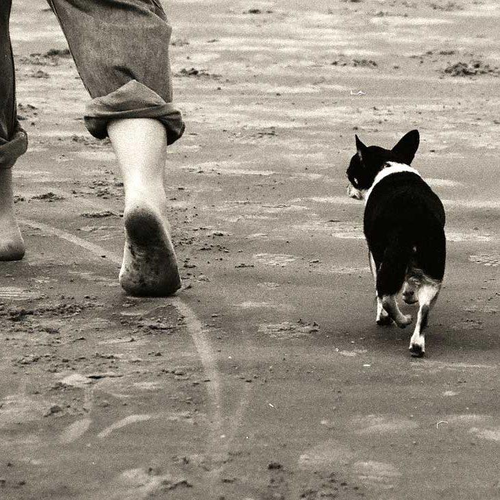 walking-beach-1582191_1280